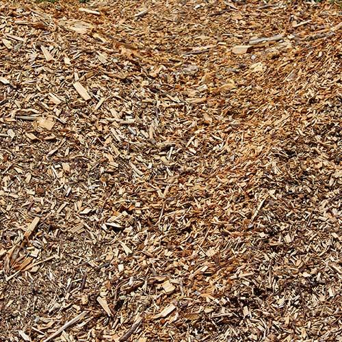 Bois-rameal-fragmente