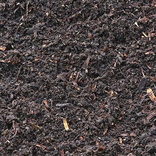 Tourbe-noire