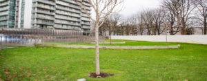 HEADER-TERREOLE-parking-Bois-le-Pretre-Paris1